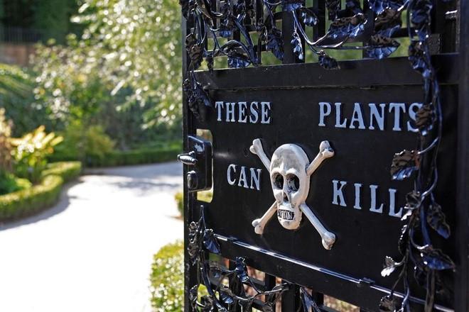 """Khu vườn """"cực độc"""", cây có thể gây chết người hoặc hôn mê - 1"""