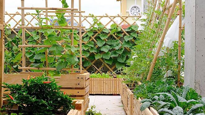 Nông trại xanh - Vinny Farm: Vườn rau xanh trong gia đình Việt - 1