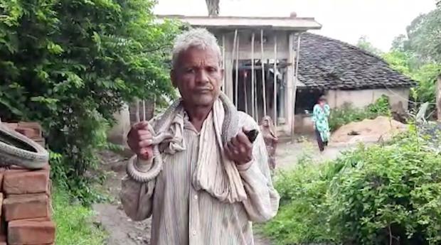 Ấn Độ: Tự tin miễn nhiễm với nọc rắn và kết cục khi quấn hổ mang chúa quanh cổ - 1
