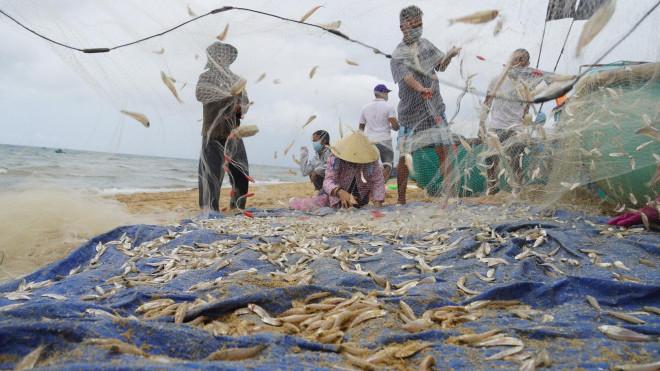 Ngư dân Bà Rịa- Vũng Tàu vỡ òa khi cá, tôm đầy thuyền trong ngày đầu mở biển - 1