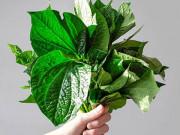 Tin tức sức khỏe - Bất ngờ, nắm lá quen thuộc vườn nhà giúp đẩy lùi cơn khó chịu do trĩ một cách nhàn tênh