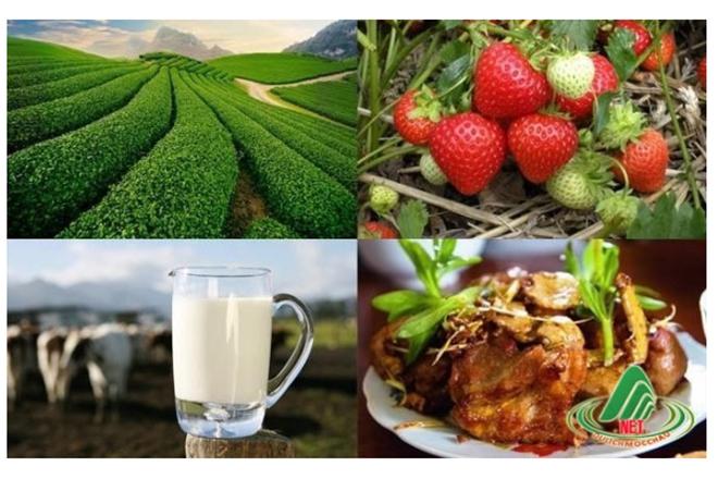 Đặc sản Sơn La – Miến dong Mộc Châu: Nơi trao giá trị qua từng sản phẩm - 1