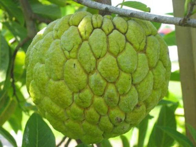 5 loại trái cây không hạt ''làm mưa làm gió'' trên thị trường - 1
