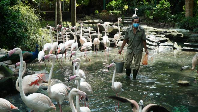 Cận cảnh Thảo Cầm Viên Sài Gòn sau nhiều tháng đóng cửa - 1