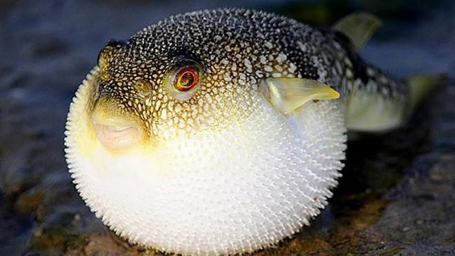 Một số loại cá, hải sản nên thận trọng khi ăn để phòng nguy cơ ngộ độc nặng - 1