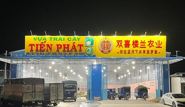 Vựa trái cây Tiến Phát chuyên thu mua xuất khẩu trái cây, mít – sầu riêng - 1
