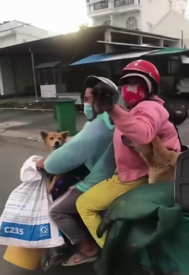 Chủ nhân 15 con chó bị tiêu hủy ở Cà Mau: Tôi quá mệt mỏi! - 1