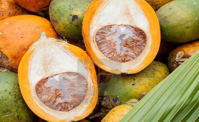 """Trước đây ở Việt Nam, quả cau thường được thưởng thức cùng với lá trầu và vôi tôi. Tuy nhiên chủ yếu chỉ có người già mới """"nghiện"""" món ăn này."""