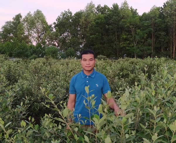 Đem cây dại về trồng để bán, người đàn ông Lạng Sơn thu cả tỷ đồng/năm - 1