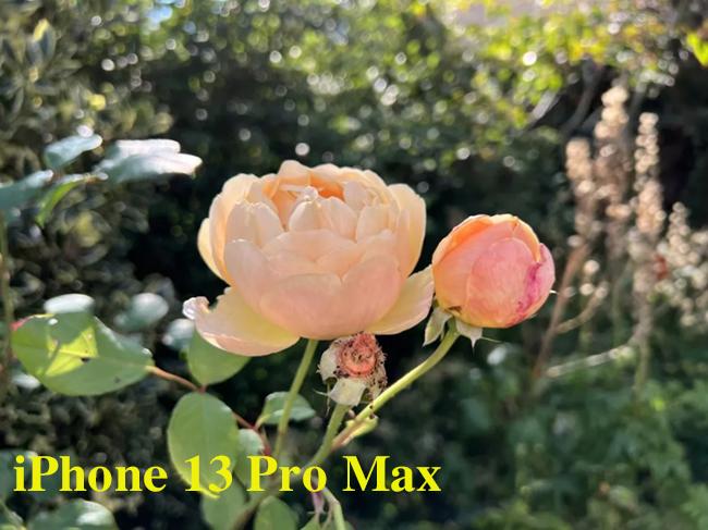 So sánh camera iPhone 13 Pro Max và Galaxy S21 Ultra - 3